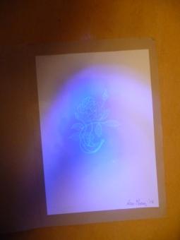 'This guy's not for burning'. UV pen, UV Torch on A4 paper. Rose Strang 2018