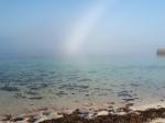 Morning Mist. Photo Rose Strang 2020